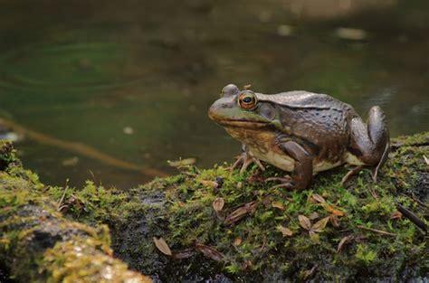 si鑒e crapaud du relais du vert boisquelle différence entre la grenouille et le crapaud