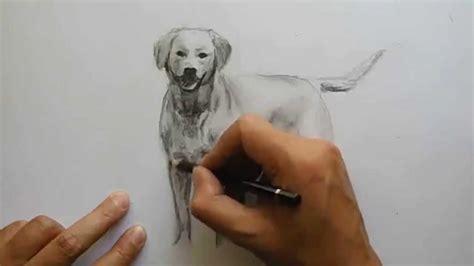 Como Dibujar Perro Labrador A Grafito