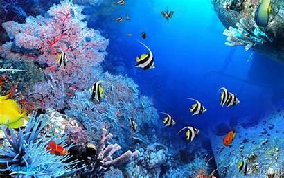 Aquarium Fish Animated Desktop Wallpapers Aqua Wallpapersafari