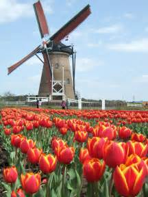 Netherlands Windmills and Tulips