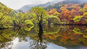 Autumn, Trees, With, Autumn, Leaves, Reflection, In, Water