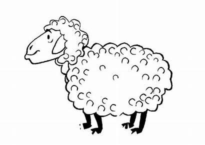 Sheep Coloring Fur Fleece