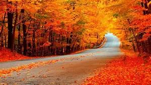 Hd, Fall, Wallpapers