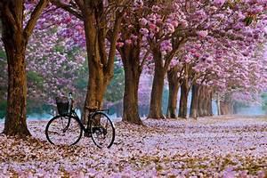 29, Beautiful, Spring, Wallpapers, For, Desktop