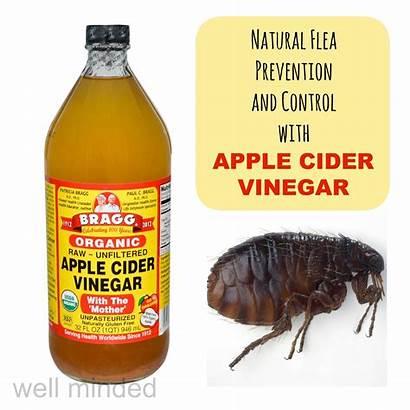 Vinegar Flea Cider Apple Natural Prevention Control