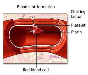 blood clotting biology notes  igcse