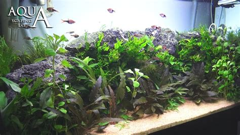 tutorial aquascape aquascaping lab tutorial planted aquarium