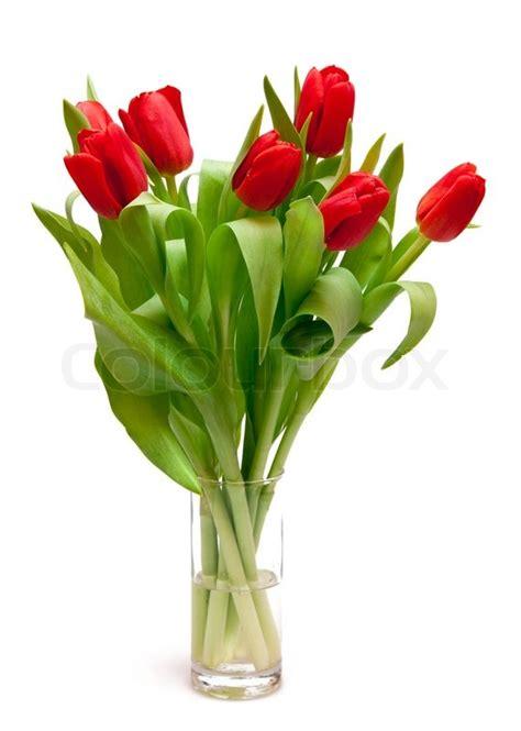 vase für tulpen sch 246 ne rote tulpen in der vase stock foto colourbox
