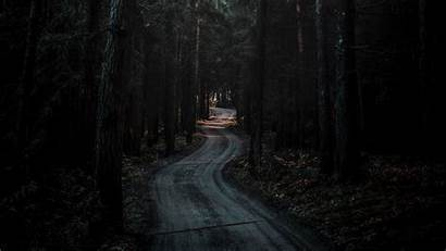 Dark Forest Road 4k Winding Nature Background
