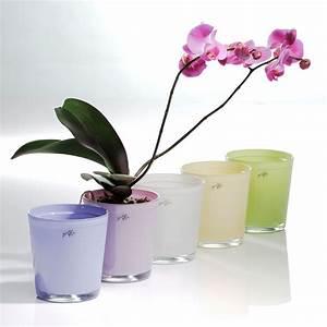 Orchideen übertopf Glas : orchideentopf blumentopf bertopf blumen bertopf gr n ebay ~ Eleganceandgraceweddings.com Haus und Dekorationen