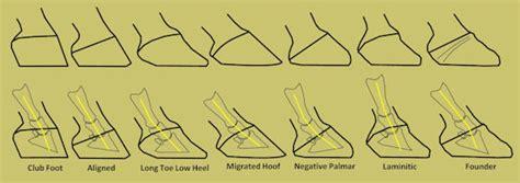 define cusion 8 hoof types explained