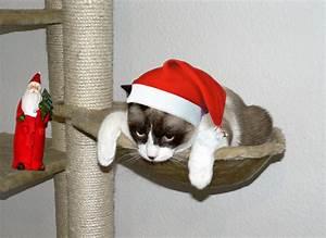 Was Ist Heiligabend : heiligabend war sch n jetzt bin ich aber platt foto bild tiere haustiere katzen ~ One.caynefoto.club Haus und Dekorationen