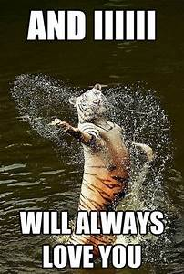 30 Funny animal captions - part 6 (30 pics) | Amazing ...