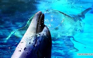 Moving Dolphin Wallpaper - WallpaperSafari