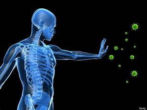 How Immune System  U0026 39 Balancing Act U0026 39  Could Help Treat Cancer