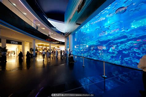 dubai mall of the emirates aquarium wroc awski informator internetowy wroc aw wroclaw