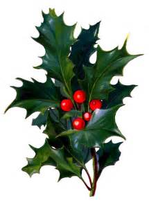 Image result for free clip art holly