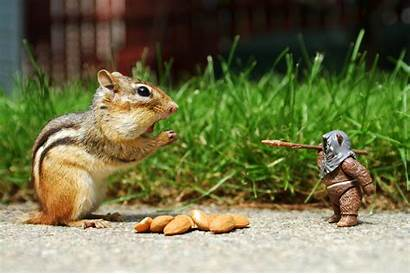 Funny Animals 1080p Wallpapers Title