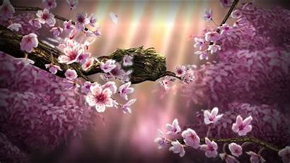 Zen Wallpapers Season Backgrounds