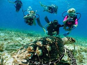 Sea Turtles: Protecting the Beloved Symbol of the Cayman ...