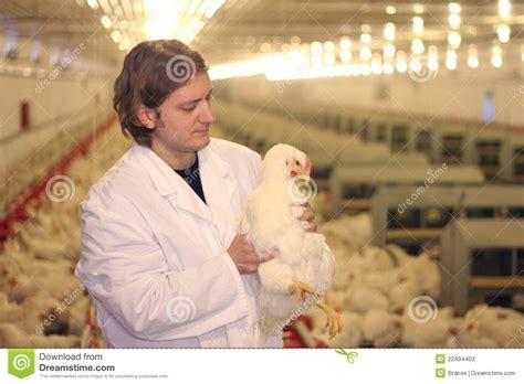 veterinarian  chicken farm stock  image