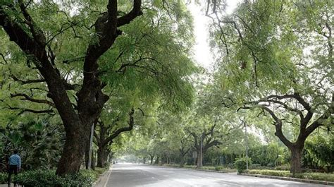 citywide outrage turns  support  trees  delhi