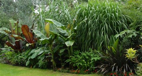 tropical garden plants list 17 best images about tropical look in zone 6 7 on pinterest gardens garden plants and tropical