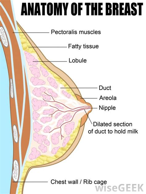 breast tissue  pictures