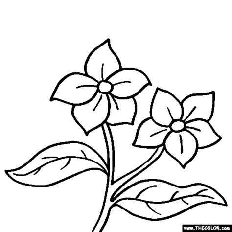 flower coloring pages   cool funny