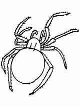 Spider Coloring Printable Animals Columbine Para Colorir Aranha Flowers Web Spiders Library Clipart Popular Advertisement Coloringpagebook sketch template