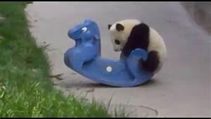 Cutest baby Panda vs rocking Horse. Cutest Animal thing ...