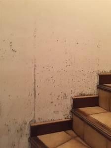 moisissures et champignons sur les murs traitement With champignons sur les murs interieurs