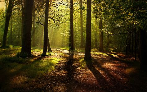 Download Forest Background 18573 1920x1200 Px High