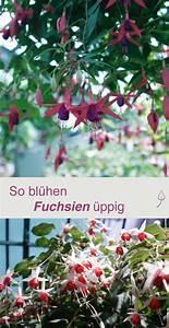Tomaten Düngen Hausmittel : die besten 25 pflanzen vermehrung ideen auf pinterest aloe vera aloe verwendungszwecke und ~ Whattoseeinmadrid.com Haus und Dekorationen