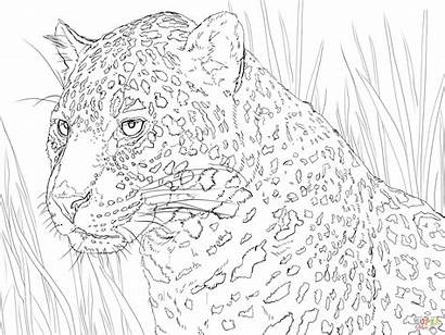 Jaguar Kleurplaat Panter Colorear Ausmalbild Ausmalbilder Zum
