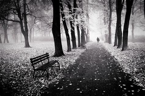gambar indah hutan alam foto ajaib warna hitam putih