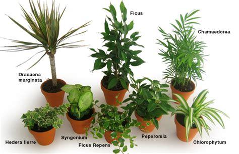 plante pour le bureau 14 plantes dépolluantes pour votre bureau