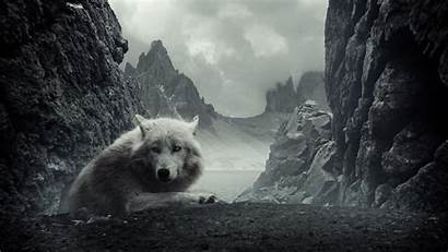 Wolf Wallpapers Rocky Mountains Backgrounds Wolves Animals
