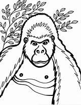 Coloring Gorilla Cartoon Animal Printable Cliparts Gorila Animals Clipart Ape Library Snowflake Elephant Popular sketch template