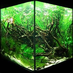 Moos Für Aquarium : terrarium h hle chinchilla bambus holz 17x5cm rennm use unterschlupf wurzel unterschlupf eb ~ Frokenaadalensverden.com Haus und Dekorationen
