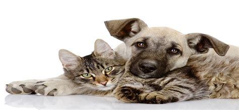 tierheilkundezentrum shop kraeuter fuer katzen verhalten