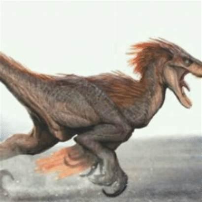 Velociraptor Dino Curiosidade Vamos Hoje Entao Carnivoro