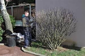 Taille De L Hibiscus : fiche taille arbustes ~ Melissatoandfro.com Idées de Décoration