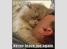 Oh honey Never leave me again Lolcats lol cat