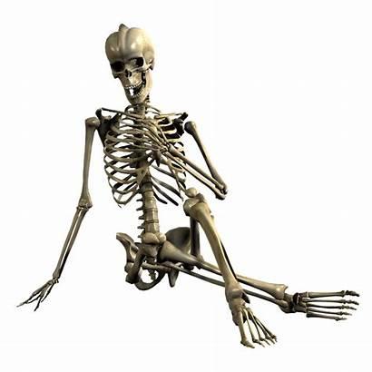 Skeleton Bones Skull Sitting 3d Bone Halloween