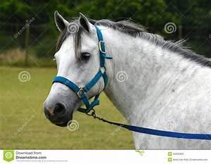 Pony Portrait Stock Photo - Image: 44935820