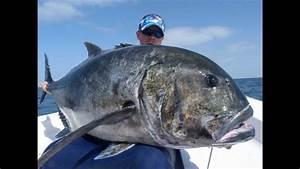 Gt, Fishing, Oman, 2012, Gt, 60, Kg