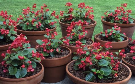plants that will survive winter how can summer plants survive the winter telegraph