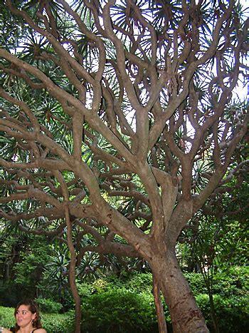 Botanischer Garten Malaga by Botanischer Garten In Malag Andalusien An Der Costa Sol