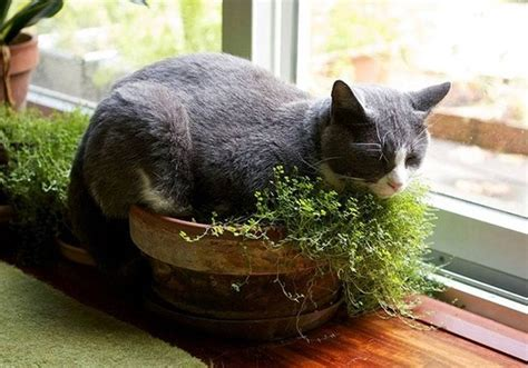 diy indoor cat garden for cat balcony garden web